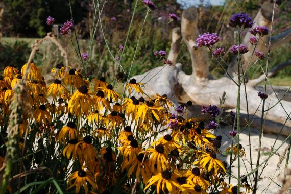 Village-playground-rudbeckia-and-verbena